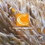 Carrageenan Company